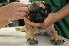 《兽医临床诊疗技术》说课.pptx