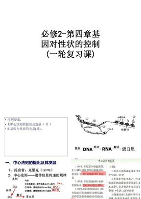 必修2-第四章基因对性状的控制(一轮复习课) ppt课件.ppt