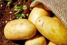 6种土豆丝做法.doc