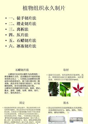 植物组织切片.ppt