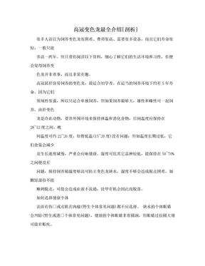 高冠变色龙最全介绍[剖析].doc