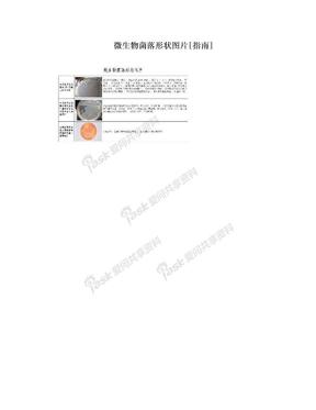 微生物菌落形状图片[指南].doc