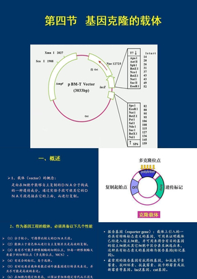 4基因克隆的载体6.ppt