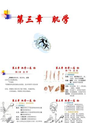 3运动肌学.ppt