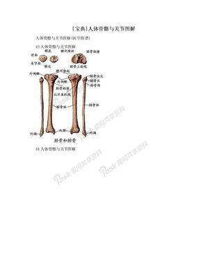 [宝典]人体骨骼与关节图解.doc