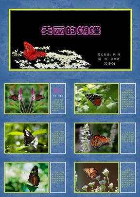 美丽的蝴蝶.ppt