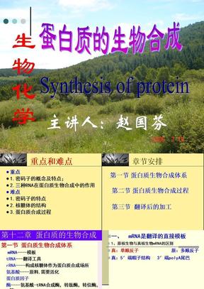 蛋白质的生物合成.ppt