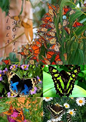 難得一見的蝴蝶.ppt