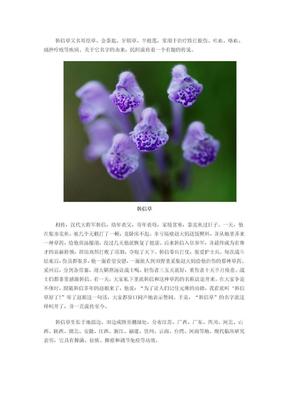 中药典故--韩信草.doc