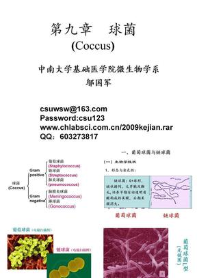 09 2009级5年制临床球菌.ppt