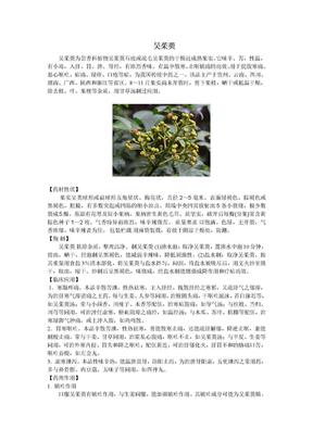 吴茱萸的临床应用.doc