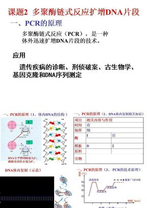 多聚酶链式反应.ppt
