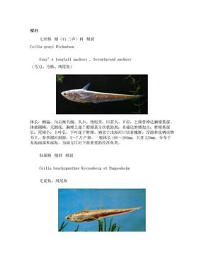 中国原生鱼种.doc