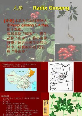 生药学  根及根茎类-JC精心整理.ppt