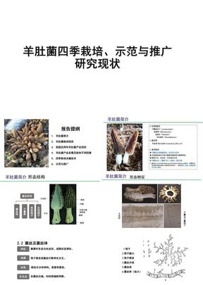 我国羊肚菌栽培、示范与推广 研究现状.ppt