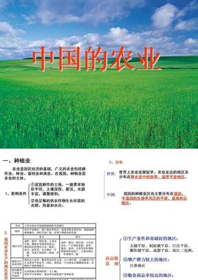 中国的农业.ppt