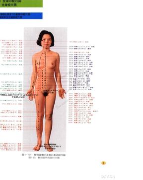 女性真人版针灸全身经穴图.doc