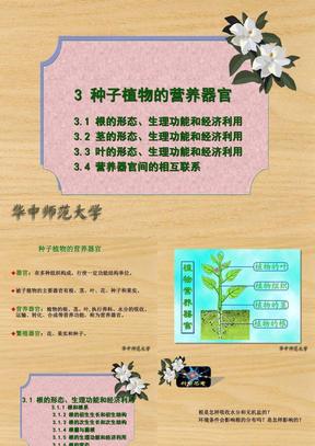 3.1 根的形态、生理功能和经济利用.ppt