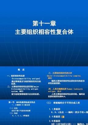 11 主要组织相容性复合体.ppt
