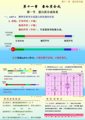 11蛋白质合成1.ppt