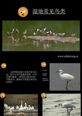深圳常见鸟类.ppt