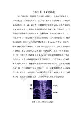 脊柱的X线解剖.doc