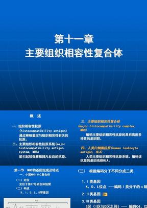 中国医科大学免疫学 课件 主要组织相容性复合体.ppt