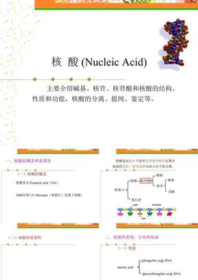 核酸1参考资料 .ppt