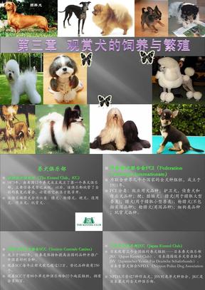 第二章 观赏犬的饲养与繁殖201206亓.ppt