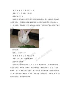 动物植物自然角观察记录(幼儿园大班).doc
