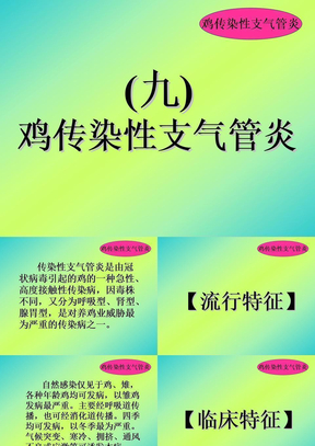 禽病学  禽病临床诊断彩色图谱  09传染性支气管炎  西南民族大学.ppt