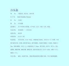 观叶观花类植物资料(下).doc