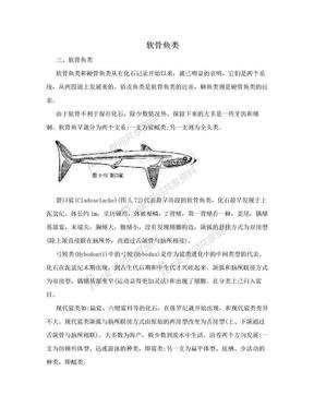 软骨鱼类.doc