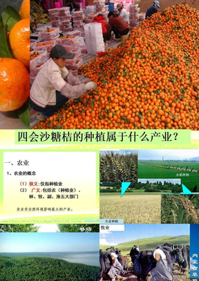 3.1农业的区位选择.ppt