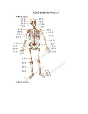 人体骨骼结构图49327428.doc