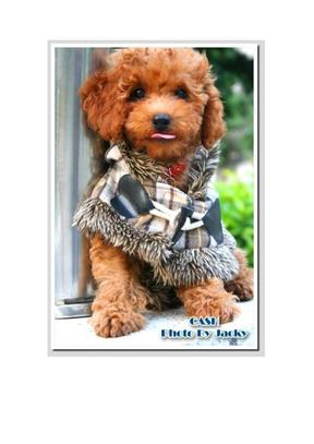 (免费)最齐全的狗狗种类图片大全.doc