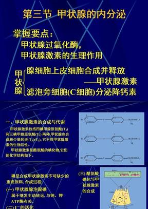 11-3_甲状腺的内分泌.ppt