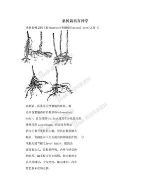 桑树栽培育种学.doc