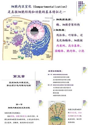 6.细胞质基质与细胞内膜系统.ppt