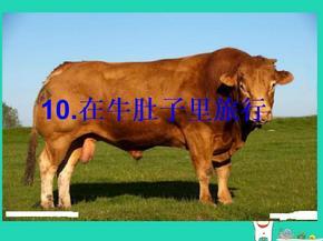 三年级语文上册第三单元第10课在牛肚子里旅行课件4新人教版.pptx