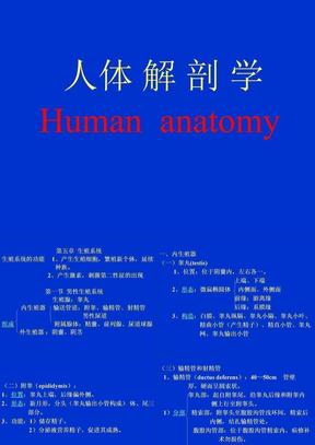 生殖系统解剖课件04.ppt