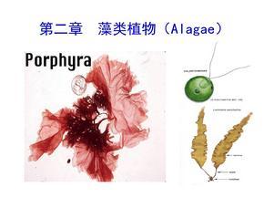观赏动植物学藻类植物详解PPT课件.ppt