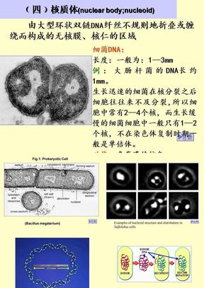 微生物学课件7.ppt