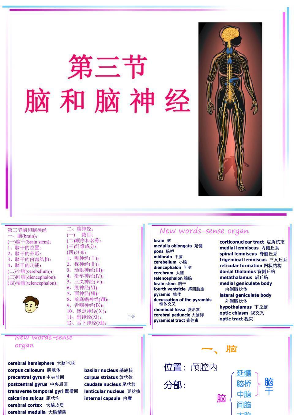 解剖-脑与脑神经(详).ppt