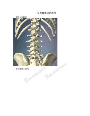 宝典腰椎层次解剖.doc