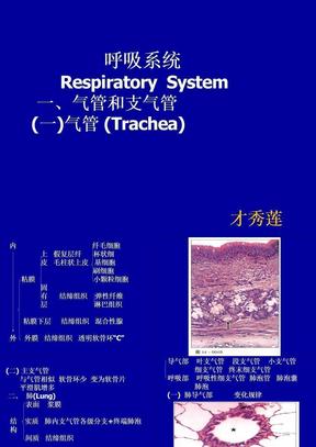 呼吸系统组织学课件01.ppt