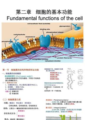 第二章   细胞的基本功能-1.ppt