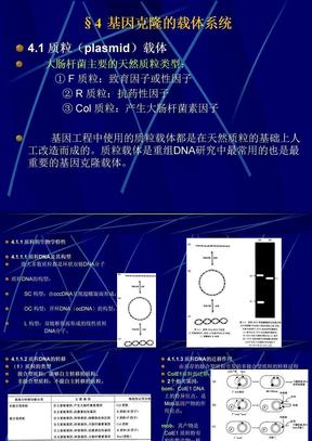 4、基因克隆的载体系统.ppt