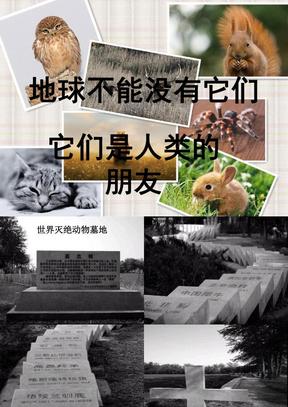 保护动物.ppt