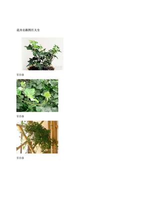 花卉名称图片大全.doc